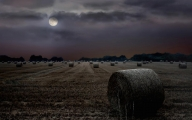 Peter North_Harvest Moon