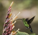 Barbara Stanley_Hummingbird
