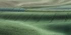 Peter North_Shades of Green