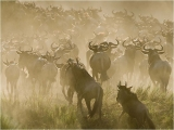 Barbara Stanley _ Crossing the Mara