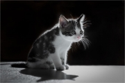 Andre Neves_Mimi the Kitten