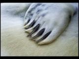 Gary Baker_Seal Pup