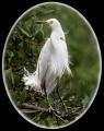 Barbara Stanley _ Windswept Egret