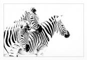 Graham Martin_Zebras Crossing