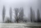 Jo Norcross_Grantchester Meadows