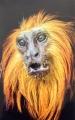 Ian Tulloch_Golden Lion Tamarin