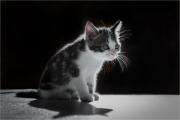 Andre Neves_Mimi the Kitten