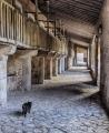 Anne Truman_Stalking Cat
