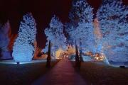 Bob Dennis_Abbey Lights