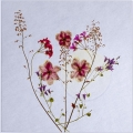 Bob Dennis_Sunny Flowers