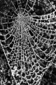 Colin Fielder_Frosted Web