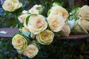 Jo Norcross_Cabbage Flowers