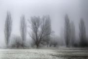 Jo-Norcross_Grantchester-Meadows