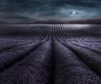 Peter North, Moonrise Over Lavender. Commended LPOTY 2018