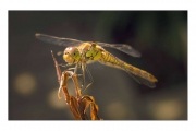 Mike James_Dragonfly-Rests