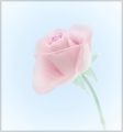 Pam Aynsley_Peter North_Faded Rose