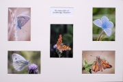 Gary Baker_Butterflies of Stockbridge Common