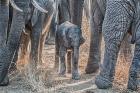 Protecting the newborn, Kruger National Park