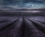 Moonrise-Over-Lavender