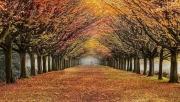 Peter North_Autumn Stroll