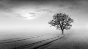 Peter-North_Dawn-Mist