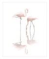 Peter-North_Flamingos