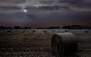 Peter-North_Harvest-Moon