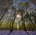 Peter-North_Howe-Wood