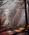 Peter-North_Last-Leaves-of-Winter