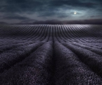 Peter North_Moonrise Over Lavender Fields