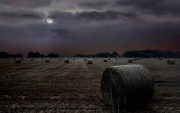 Peter-North_Harvest-Moon