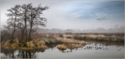 Mist-Clearing-Over-Winter-Wetland